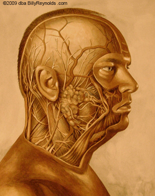 Right Face Cutaway